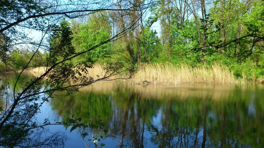 Lobau Austria Löbau Beauty In Nature Branch Day Forest Green Color Growth Lake Landscape Nature No People Outdoors Reflection Scenics Sky Tranquil Scene Tranquility Tree Water Ymoart