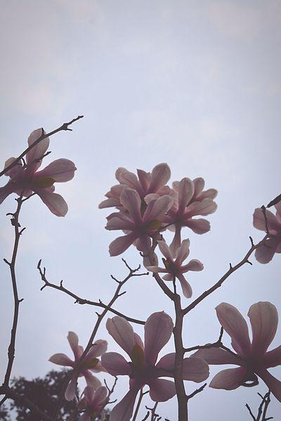 Flower Pink Color Urban Spring Fever Pink Flower Collection