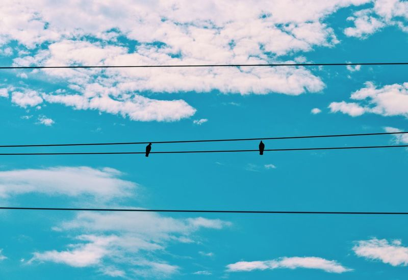 Budapest Hungary Twitter Animal Themes Bird Blue Cable Cloud - Sky Connection Low Angle View Nature_collection Naturelovers No People Outdoors Pidgeonlife Pidgeons Power Line  Sky Talking