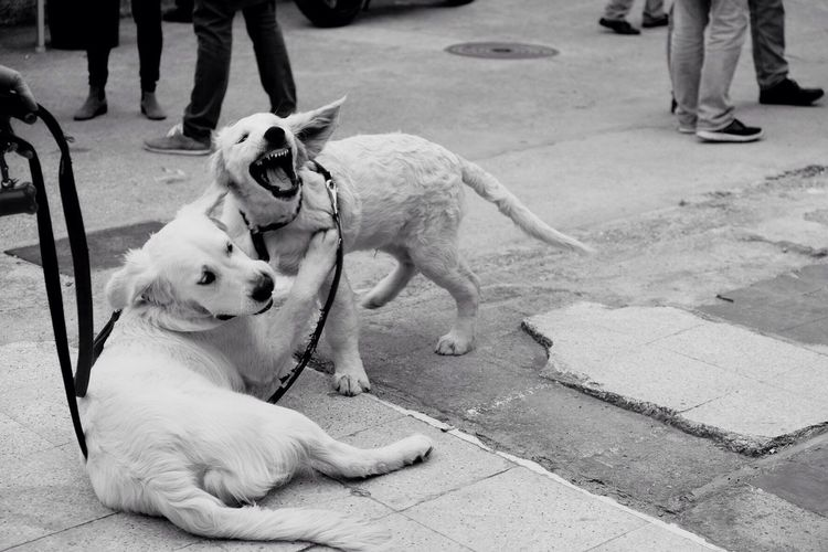 Dogs playing on street