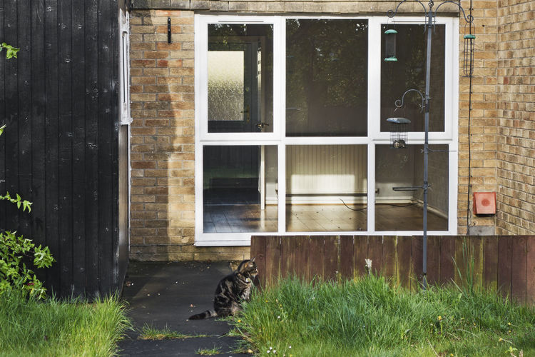 A lone cat sits by an empty property, possibly left by owners when moving house. Alone Animal Themes Architecture Building Exterior Built Structure Cat Day Domestic Animals Door Empty House Empty Property Feline Gone Away Grass Left Mammal No People Outdoors Window