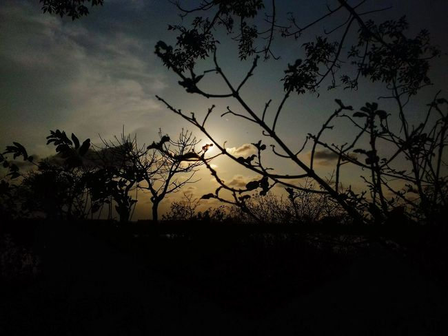 Beauty In Nature Day Camerahandphone Samsung J3 Nature Outdoors Sunset Tree Landscape Beach Nature AI Now