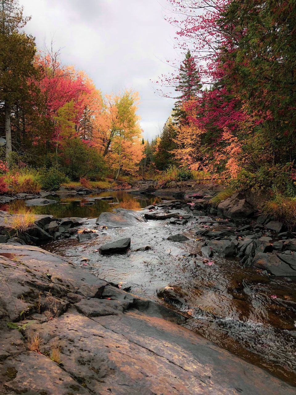 SCENIC VIEW OF STREAM IN FOREST AGAINST SKY DURING AUTUMN