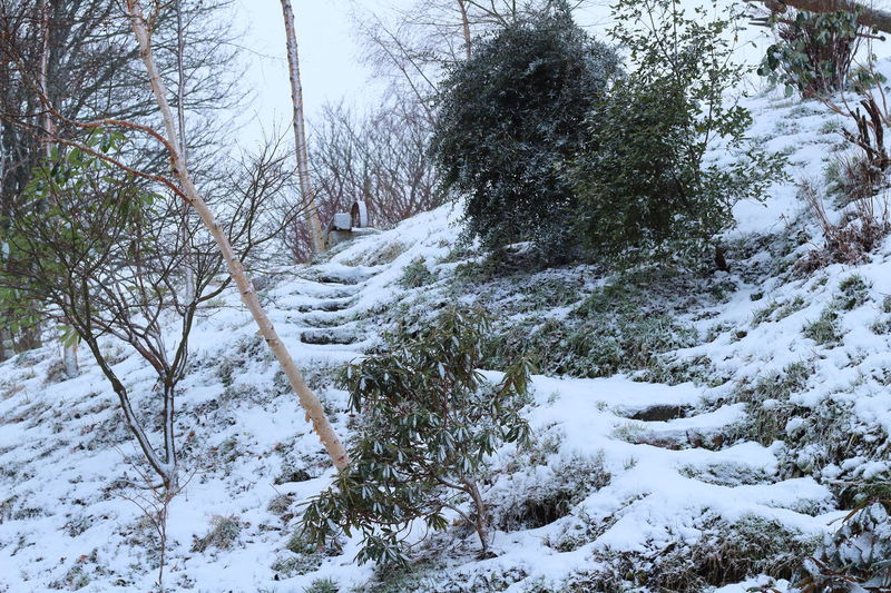 Beauty In Nature Cold Temperature Day Growth Nature No People Outdoors Scenics Silver Birch Sky Snow Snow Covered Trees Steps Steps And Staircases Tranquility Tree Winter Winter Winter Garden