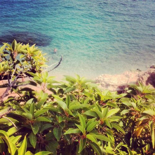 25 Days Of Summer Sunshine Makes Everything Better Sea And Sky Flowers, Nature And Beauty
