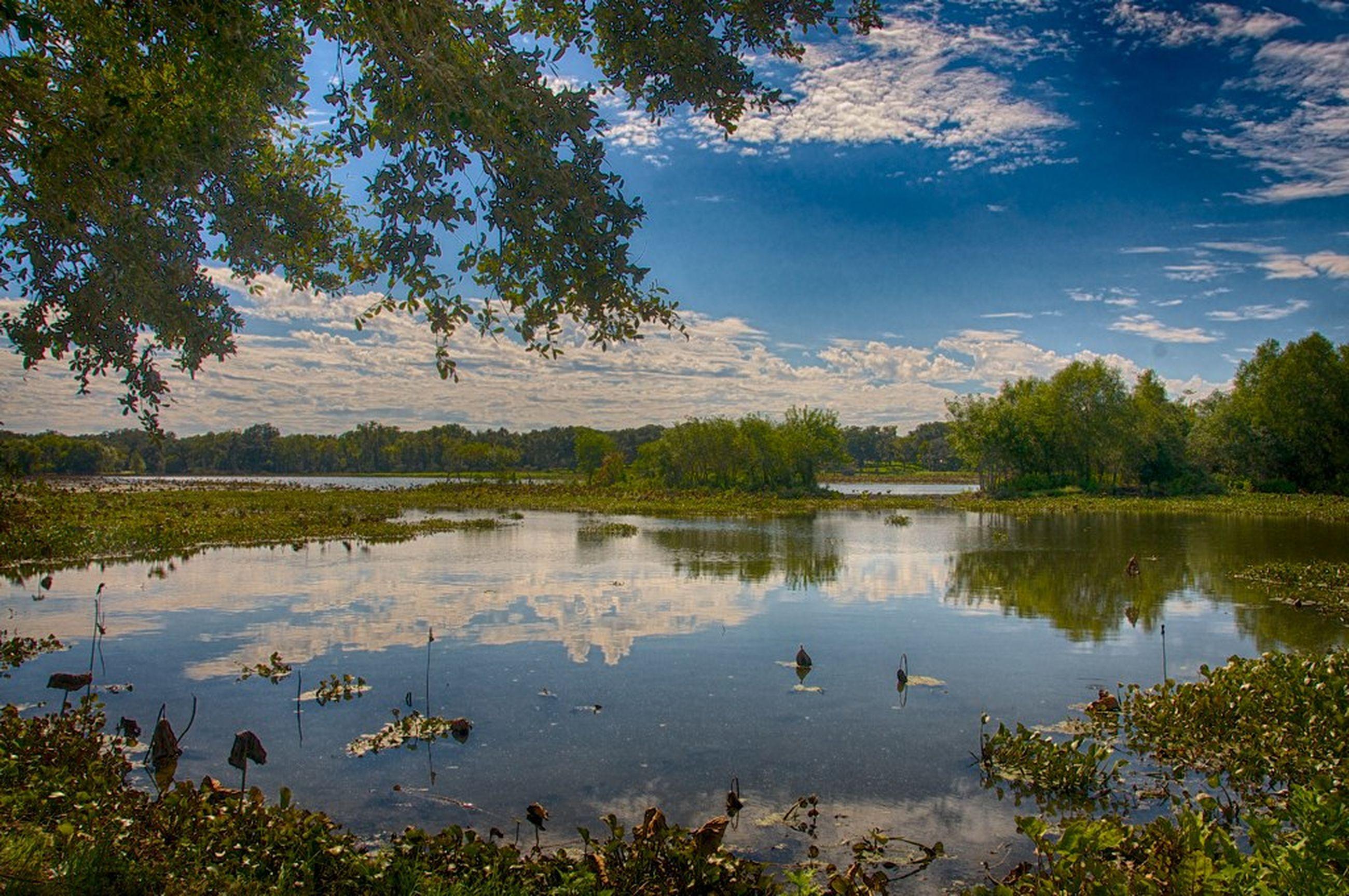 water, lake, bird, reflection, tree, animal themes, animals in the wild, wildlife, tranquility, tranquil scene, swimming, duck, nature, beauty in nature, sky, scenics, grass, lakeshore, swan, water bird