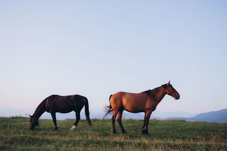 View of horses on grazing on field against sky
