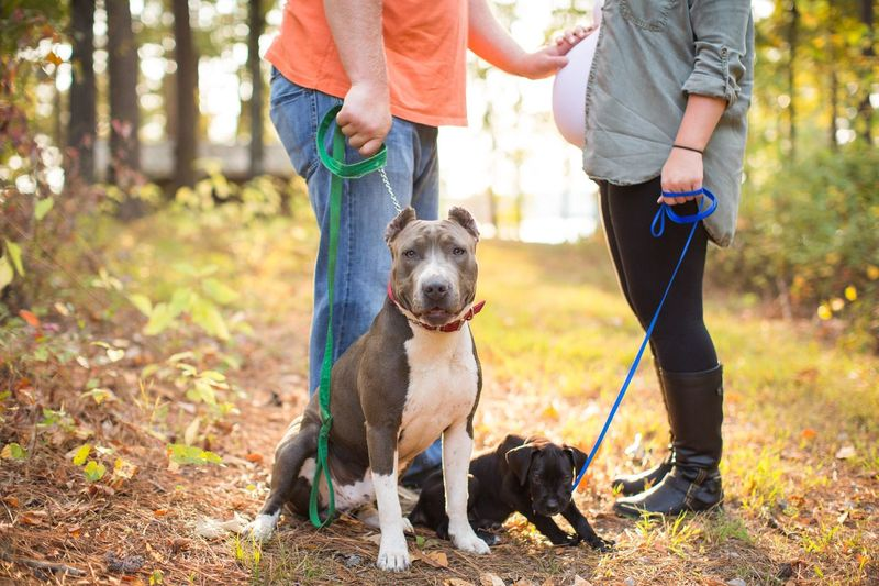 Baby bump and puppies!! Dog Pets Togetherness Outdoors Two People Men Adult Forest Nature Domestic Animals Adults Only Friendship Human Body Part Low Section Day Only Men Mammal