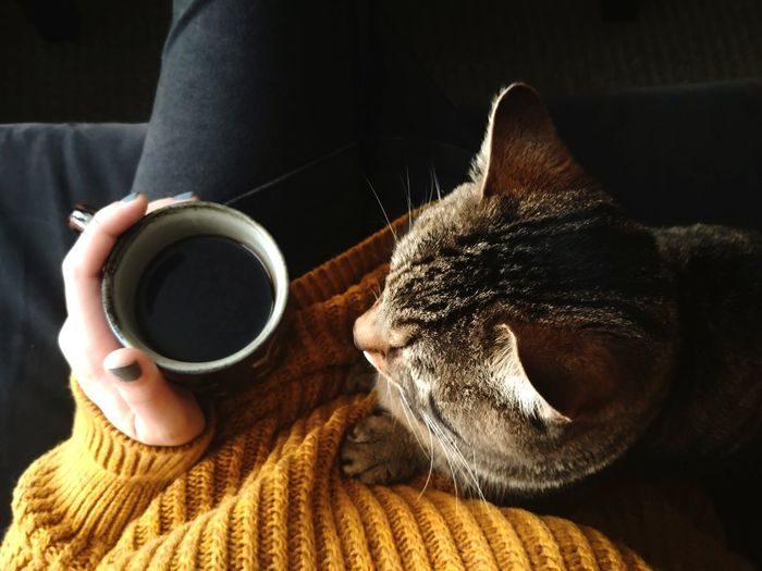 Midsection of woman having coffee while sitting with cat on sofa