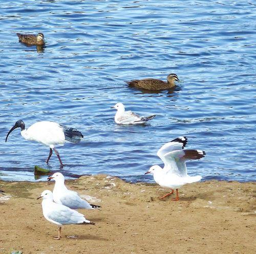 Walking Around Water Birds Bird Photography Australian Wildlife Park Lake