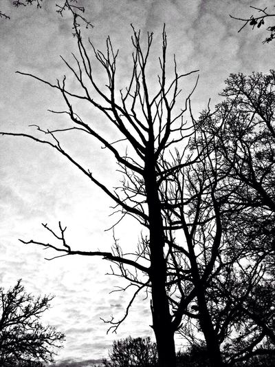 Tree Nature Loneliness Lonely Tree Blackandwhite Black And White Black & White Black And White Photography