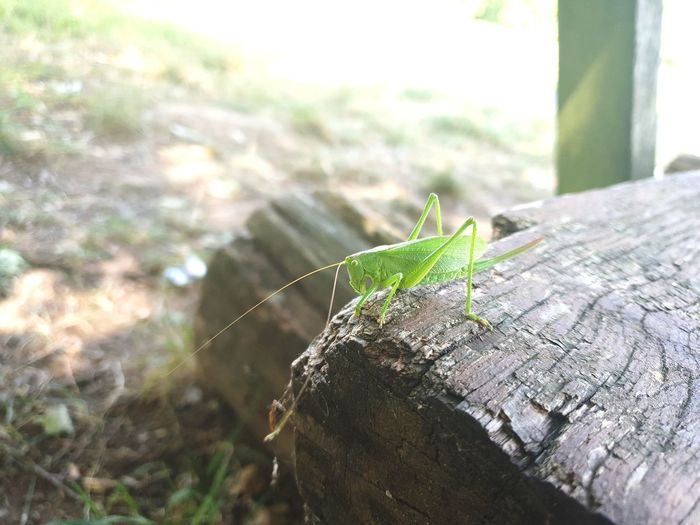 Flip Heupferd Grashopper Grashoppers Nature Nature_collection Nature Photography Naturelovers Incects Green Green Color Insect Grasshopper Close-up Crawling