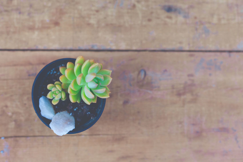 Table Directly Above Close-up Wood - Material Green Color Freshness High Angle View No People Still Life Indoors  Day Focus On Foreground Plant Multi Colored Flooring Nature Suculent Succulent Plant Cactus