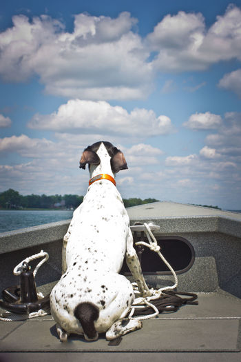Dog sitting on shore against sky