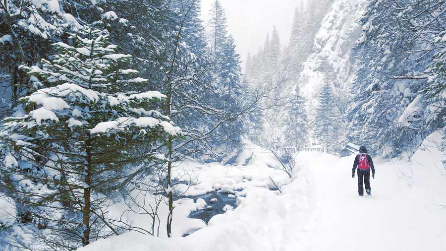 Person hiking in winter forest