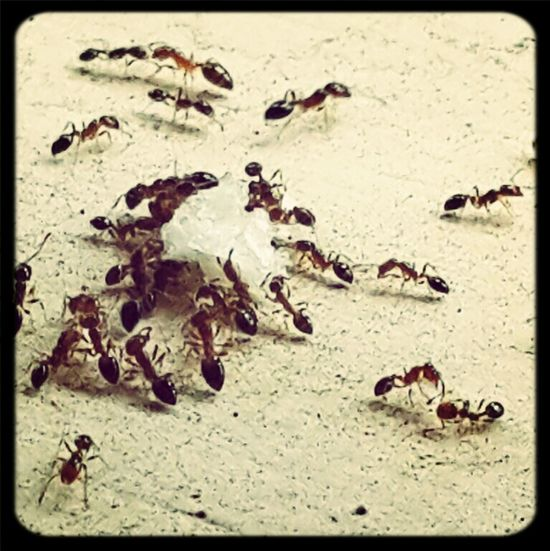 Ants Life Mizz Nunuy Taking Photos