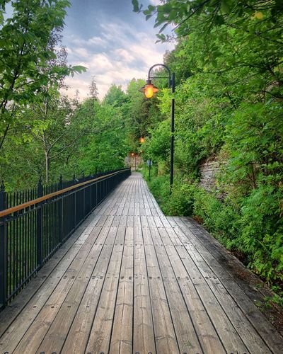 Plant Tree Direction Nature The Way Forward Footpath Growth Bridge Connection Green Color