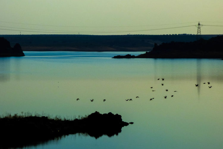 Silhouette birds in sea against sky
