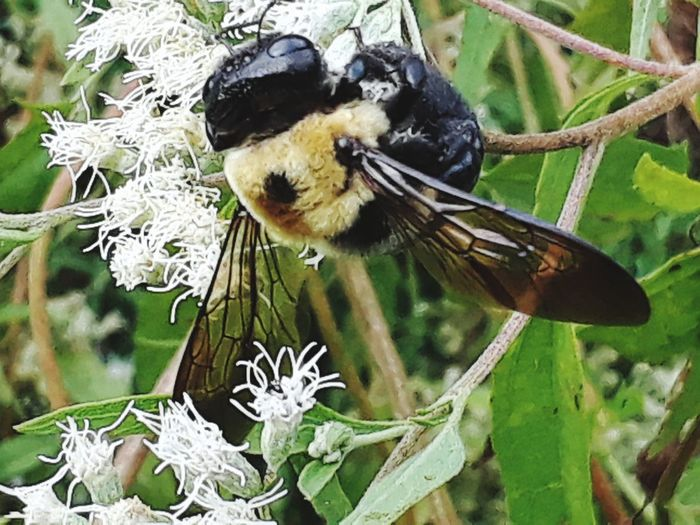 bee Flower Bee