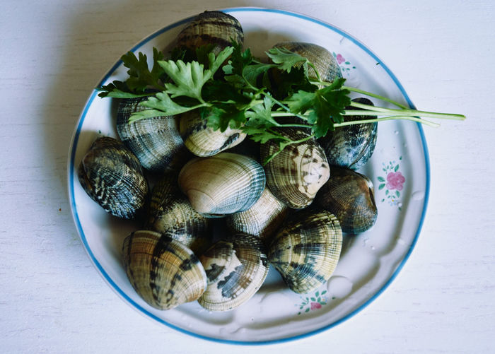 High angle view of shells in plate