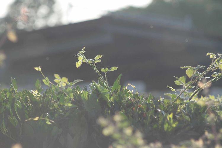 Plant EyeEm