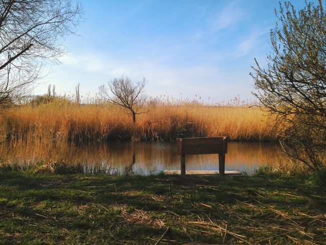 A fisherman's bench at Neusiedler See Bare Tree Beauty In Nature Bench Fertőtó Eyeemphoto Lake Landscape Colour Of Life 43 Golden Moments Nature Nature On Your Doorstep Neusiedler See Neusiedlersee Plant Reed Reeds Reflection Rural Rural Scene Scenics Tranquil Scene Tranquility Tree Water Wetland Breathing Space