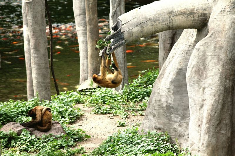 Monkeys by trees at zoo