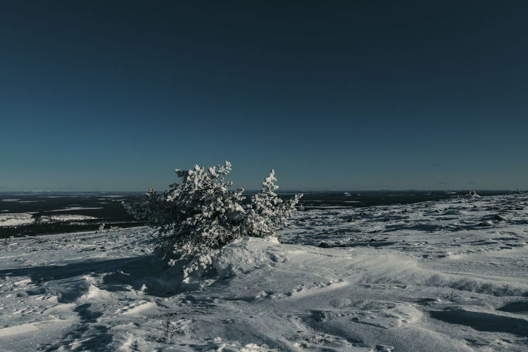Winter Cold Temperature Sky Beauty In Nature Snow Scenics - Nature Nature Clear Sky No People Tranquil Scene Tranquility Day Copy Space Land Blue Non-urban Scene Environment Horizon Outdoors Finland EyeEm Nature Lover