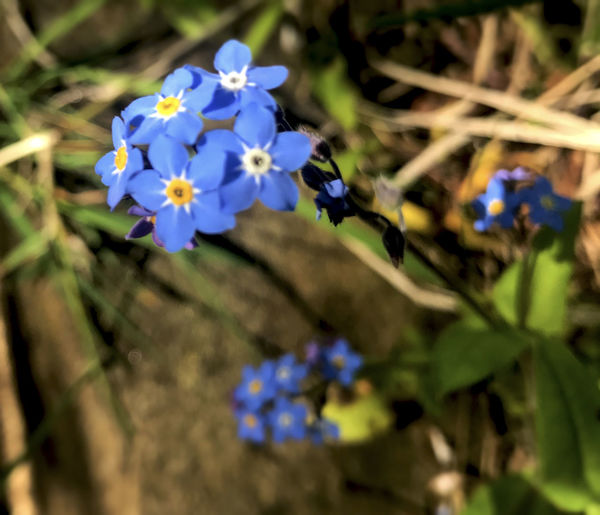 Beauty In Nature Blooming Blue Close-up Day Flower Flower Head Fragility Freshness Growth Nature No People Outdoors Petal Plant