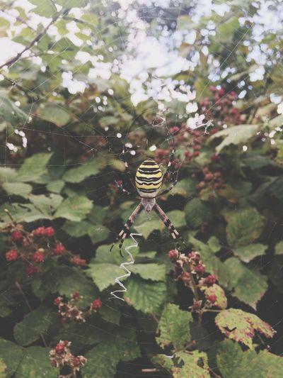 Spider паук Nature Природа паутина красиво