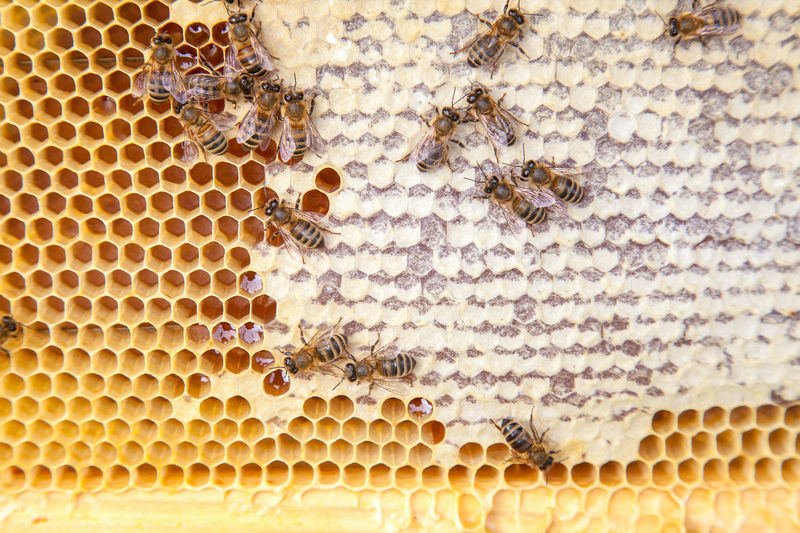 Close-up of bees on honey comb