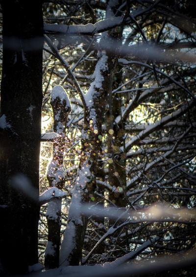 Snowing ❄ Trees
