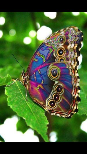Colourful Colors Betterfly Gods Creation