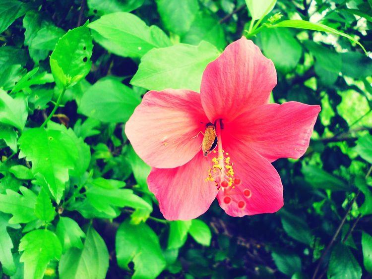 Pastel Power Nature_perfection Colorsplash