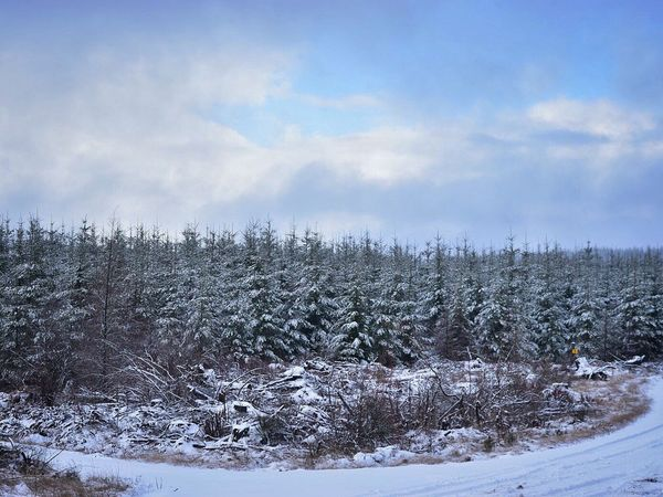 Cold Temperature Snow Winter Weather Sky Nature Tranquility Beauty In Nature Tranquil Scene Tree Scenics No People Outdoors Cloud - Sky Bare Tree Day Cold Weather Snow Covered Nature Winter Trees Logging Roads Landscape Tree