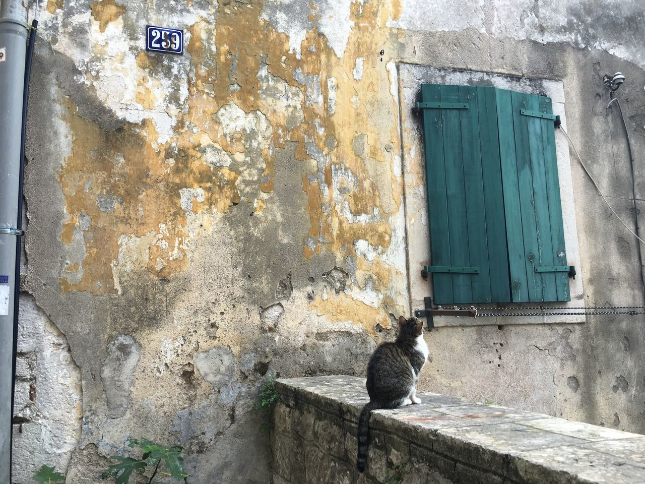 building exterior, architecture, built structure, animal, animal themes, one animal, mammal, window, no people, day, building, wall - building feature, old, door, feline, cat, weathered, domestic animals, domestic cat, vertebrate, outdoors