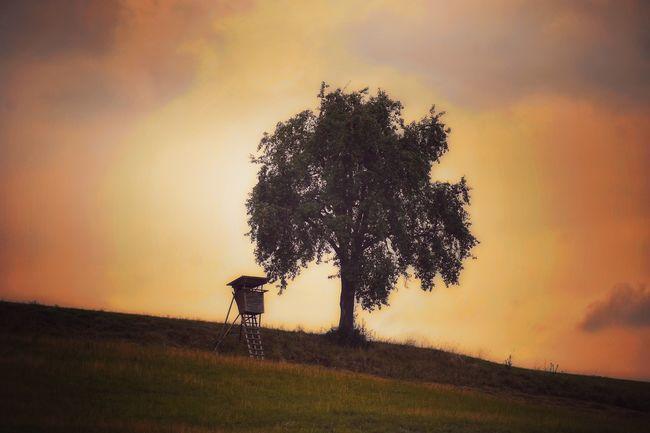 Sunset Sky Tree Land