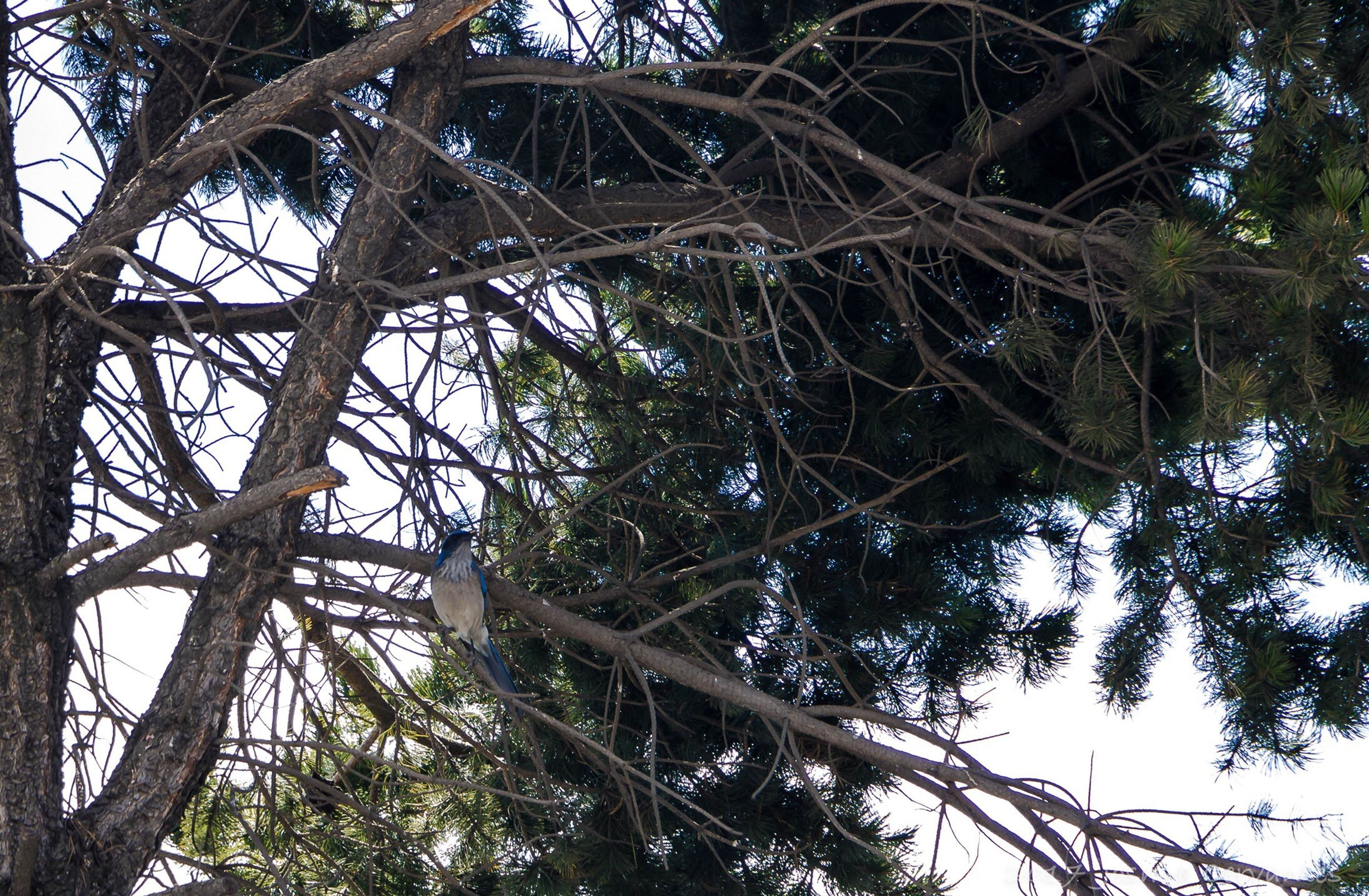 tree, low angle view, nature, growth, branch, beauty in nature, no people, outdoors, tranquility, day, sky, backgrounds