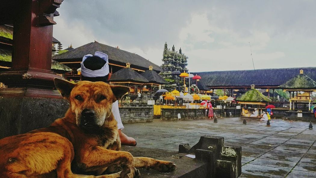 Pitiful dog Travel Photography Explorebali Bali Besakih Temple Kintamani Dog Hinduism Contemplation