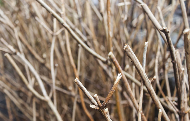Stick - Plant Part Wilted Plant Dried Dead Plant Plant Day Selective Focus No People Close-up Nature Dried Plant Dry Twig Brown Full Frame Tranquility Field