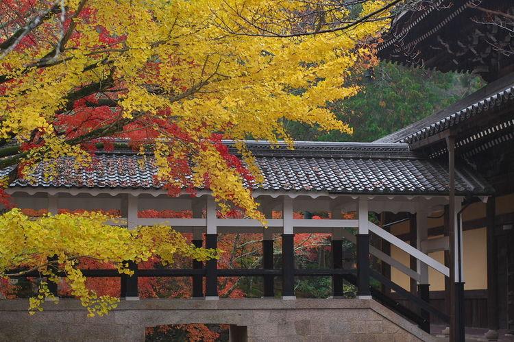 そうだ京都、行こう。 南禅寺 紅葉 紅葉🍁 Nanzenji Temple Autumn Leaves Autumn🍁🍁🍁 Nature Nature Photography Nature Collection Outdoors Beauty In Nature