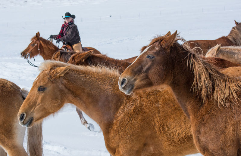 Feb 2019 - Music Meadows Ranch Colorado Cowboy Cowboy Hat Herd Of Horses Working The Herd Ranch Life Working Animal Animal Themes Domestic Animals Livestock Snow Winter Warm Clothing Real People Animal Head  Field Cold Temperature Horse Domestic Herbivorous Group Of Animals Mammal Animal Vertebrate Land