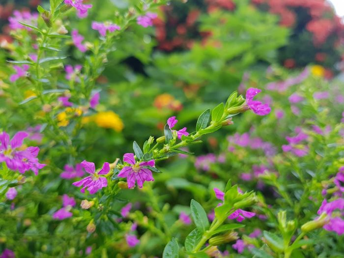 Flower Nature Summer Plant Leaf Green Color Pink Color Outdoors Living Organism No People Outdoor Pursuit Beauty In Nature Day Growth Nature Reserve Close-up Plant Part Fragility Botanical Garden Freshness Selective Focus Yellow Grass Petal Flower Freshness Sky