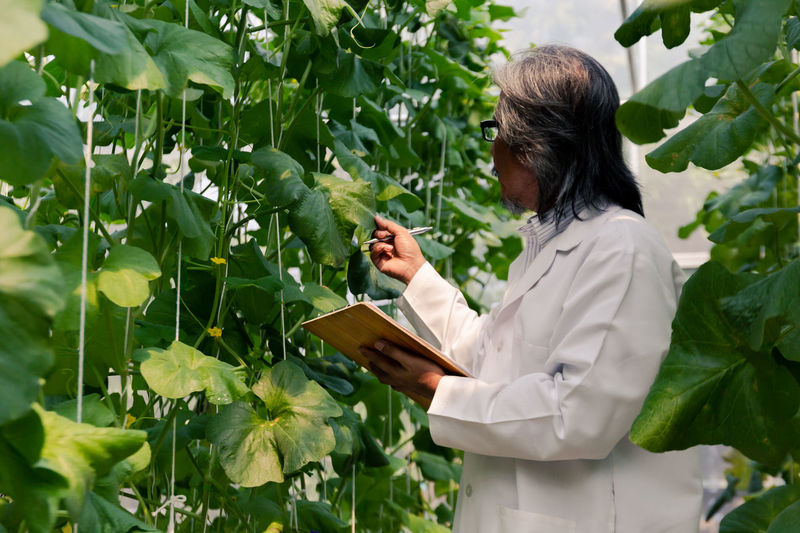 Side view of scientist examining plants at farm