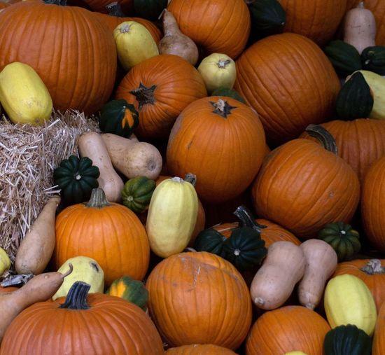 Pile of pumpkins Pumpkins Food Healthy Eating Wellbeing Freshness Full Frame Pumpkin Large Group Of Objects Abundance Orange Color Vegetable Backgrounds Market For Sale Still Life