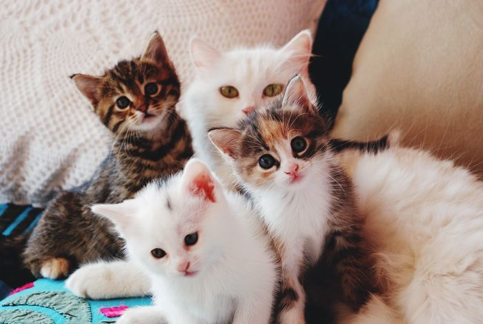Cats Cat Babycats Babycat Catfamily Mothercat Curiosity Cute Pets Baby Cat Baby Cats Family Cute Cat Family Mother Pet Portraits
