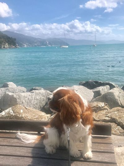Full Length Cavalier King Charles Spaniel Water Sea Sky Animal Themes Animal One Animal Cloud - Sky Beauty In Nature Nature Sunlight Mammal Horizon Over Water Scenics - Nature No People Beach Dog Canine Land Pets Land