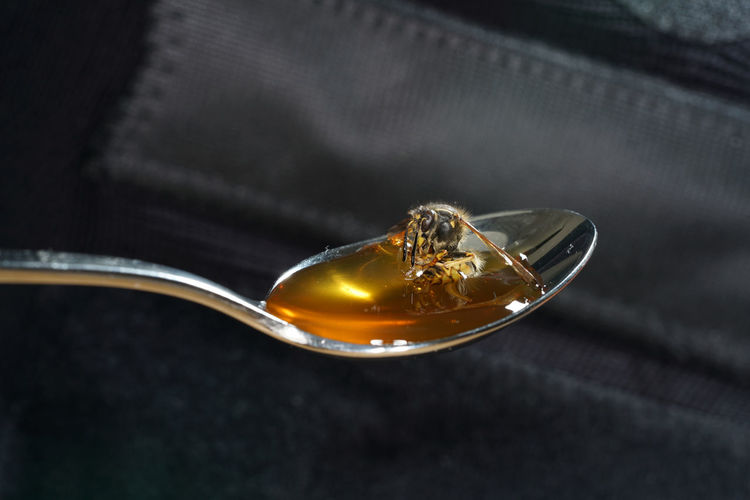 Close-up of bee on honey