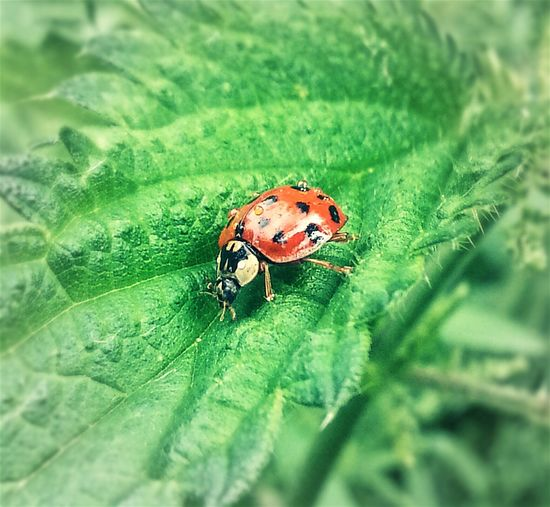 Nass geworden ... Insect One Insect Insect In Nature Scenics No People Beauty In Nature Things I Like Fragility Insect Photo Plant Green Color Water Come With Me And Let Me Show You My World