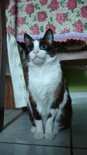 Cat Mycat Meugatowhiskas Chaminhoironico Cute Cats Cute Pets